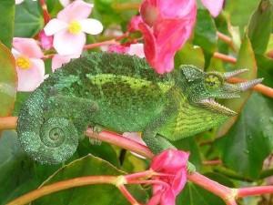 kameleon-kundalini