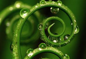 spiral-leaf-kundalini